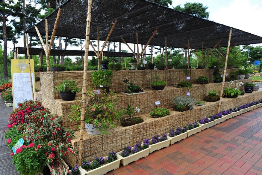 한밭수목원, 우리꽃 전통생활식물 전시 (1).JPG